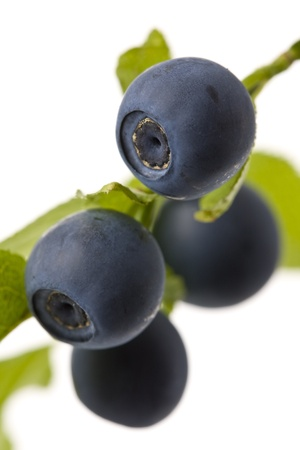 Blueberries on a white background shown.