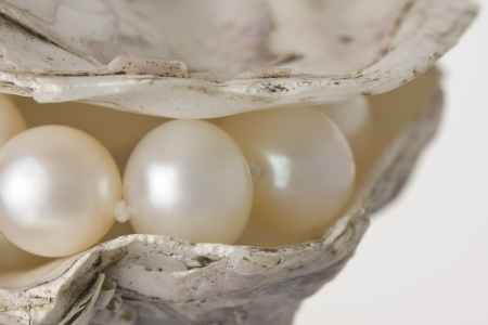 A string of pearls in a shell on a white background.
