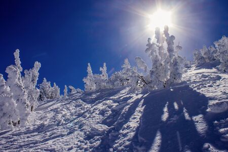 sierras: Snow covered trees, following a heavy snowfall, Mammoth Mountain, California, United States Stock Photo