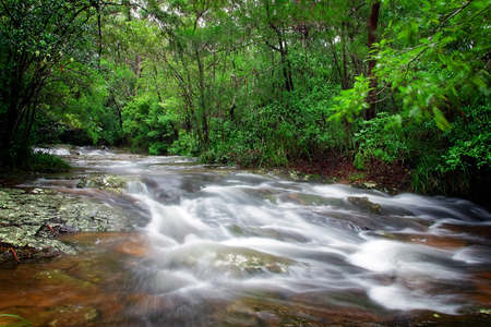 Boy-ull creek in World Heritage listed Springbrook national park photo