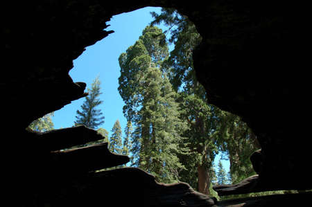 The view from inside of a fallen Sequoia tree, Sequoia National Park, California Banco de Imagens