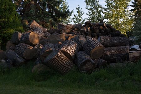 cut grass: Large pile of cut logs piled high on grass Stock Photo