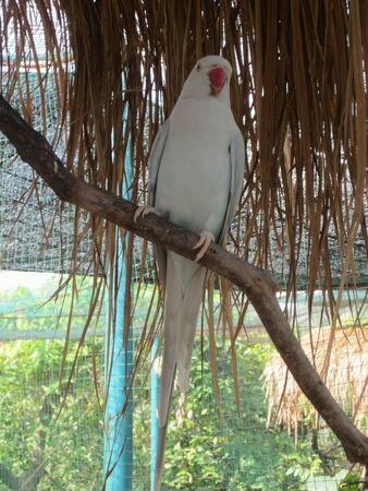 white bird: A white bird