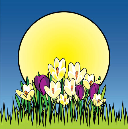 tulips in green grass: Sunrise with crocuses Illustration