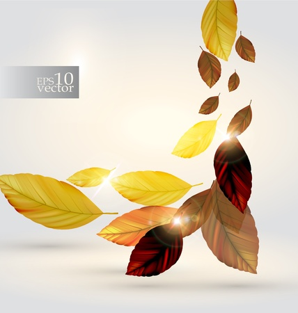 Autumn leaves design Stock Vector - 10573450
