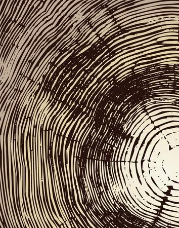 Holz Querschnitt Hintergrund