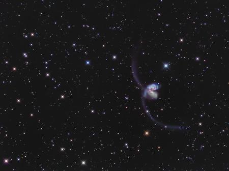 the antennae: Real interacting galaxies called Antennae galaxies or NGC 4038-4039 in the constellation Corvus taken through medium focal length telescope Stock Photo