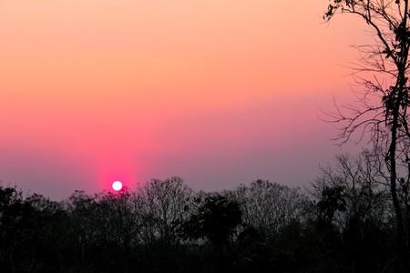 wilding: Twilight in teak wilding
