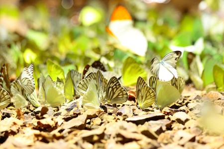 Marble butterflies photo