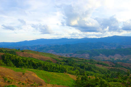 wilding: Deforest for agriculture on mountain