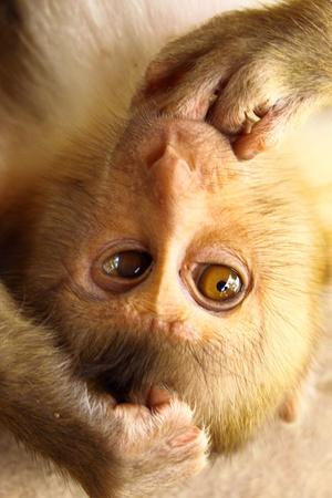 pity: A pity baby monkey