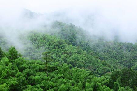 wilding: Bamboo forest in rainy season,Thailand