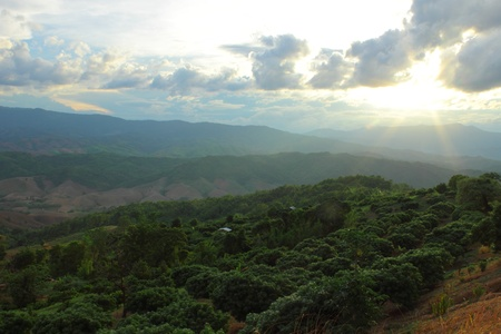 wilding: Sunlight at the end of day,northern of Thailand