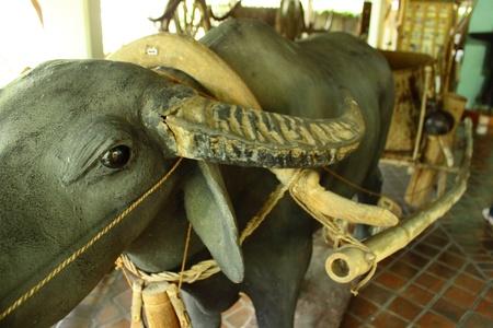 spuria: Un bufalo d'acqua aggiogare carrello a due ruote Archivio Fotografico