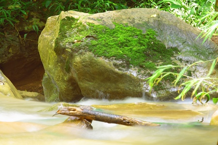 wilding: Moisture of nature in tropical wilding Stock Photo