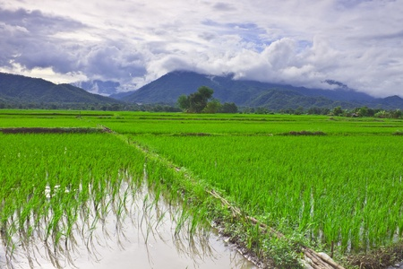 Rice field among mountain on central of Thailand photo