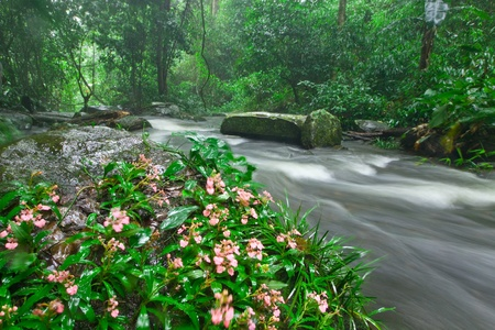 wilding: Rill,tropical forest in raining and Habenaria rhodochela flower Stock Photo