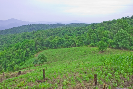 wilding: Deforestation for maize cultivation on mountain Stock Photo