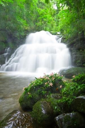 Habenaria rhodochela flower and  Mun Daeng  waterfall photo