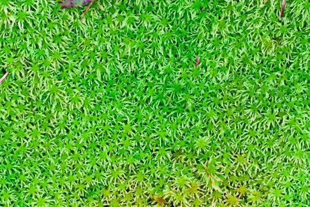 dank: Background of Calanthe triplicata,green nature of Thailand