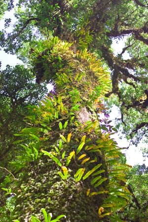wilding: Ancient tree covered with moss and fern