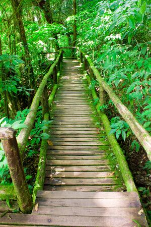 wilding: Wooden trace under shade and cover with moss Stock Photo