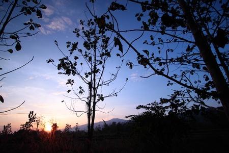 wilding: Teak and wilding on twilight of winter,Thailand