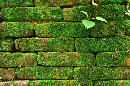Mossy wall photo