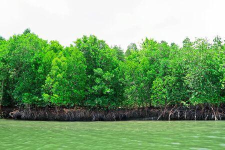 wilding: The brake of mangrove for nursery of tiny fish Stock Photo