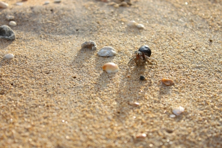 Hermit crab on Andaman beach,Thailand Stock Photo - 16741879