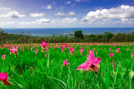 wilding: Heaven of the ground,field of Kra-Jeaw,Thailand