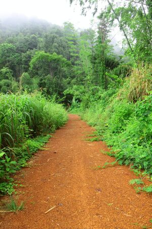 wilding: The trail on the morning of rain forest climate,Thailand Stock Photo