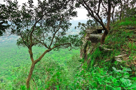 wilding: Cliff and the wilderness below,the tropical of Thailand