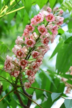 wilding: Pink Poo Ka flowers