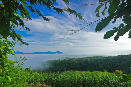 wilding: Low level cloud among Nam Prao valley,Phrae,Thailand