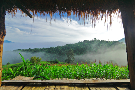 View from porch of bamboo hut on early morning photo