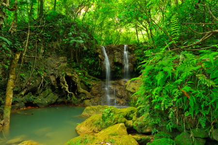 wilding: Cascade in Um Phang forest,tropical of Thailand