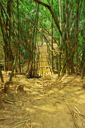 wilding: Go into bamboo forest