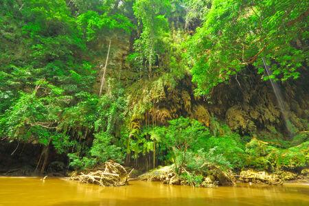 wilding: T Lor Lae waterfall,Um Phang,Tak,Thailand