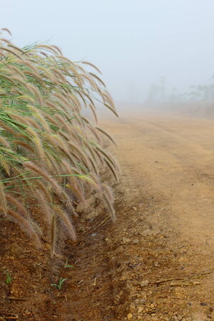 dirtroad: Grass flower,dew and trail under the mist in winter of Thailand Stock Photo
