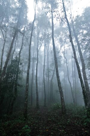 plentiful: Among the foggy and plentiful forest in Thailand Stock Photo
