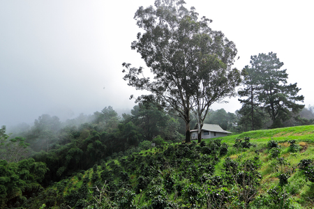 wilding: Bungalow and coffee garden on top of mountain