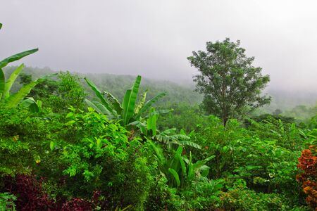 wilding: Tropical forest in winter of Thailand