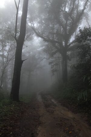 dirtroad: Into the misty and deep in forest Stock Photo