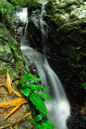 wilding: RaChaNuPharp on the waterfall,the new kind vegetation of the world