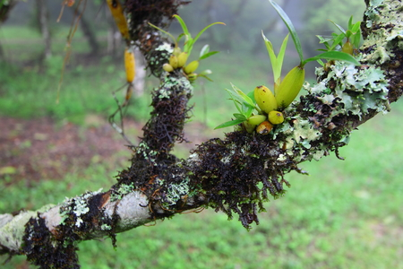 fungoid: Wild orchid and moss on branch of tree Stock Photo