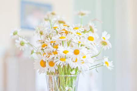 Chamomile morning photo