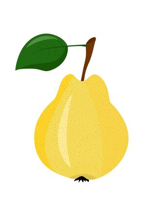 Yellow pear on a white background Stock Vector - 59162548