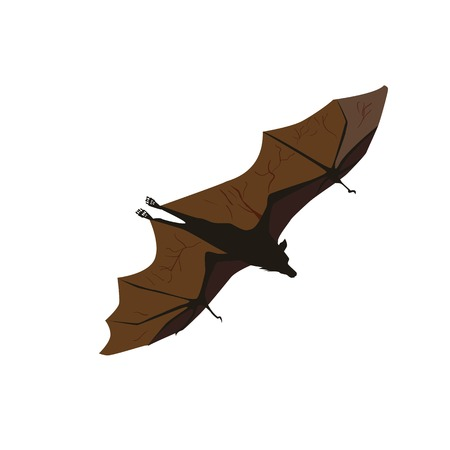 Bat isolated on white background Illustration