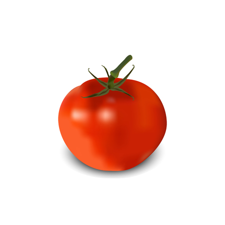 Tomato realistic. vector illustration Stock Vector - 67315984